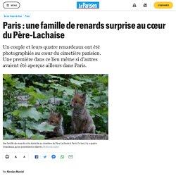 Paris : une famille de renards surprise au cœur du Père-Lachaise
