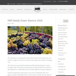 Hill Family Estate Harvest 2020