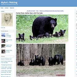 Family Photo: Mother Bear with Five Cubs - Myke's Weblog