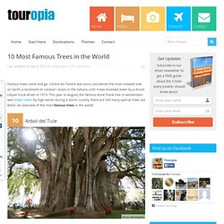 10 Most Famous Trees in the World | Touropia