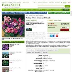 Fantasy Hybrid African Violet Seeds