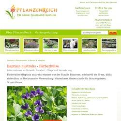 Baptisia australis - Färberhülse Bilder, Fotos, Standort, Boden, Pflege, Vermehrung