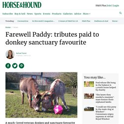 Farewell Paddy: tributes paid to donkey sanctuary favourite - Horse & Hound