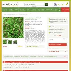 Fargesia jiuzhaigou 'Red Panda'® - Vente Bambou rouge