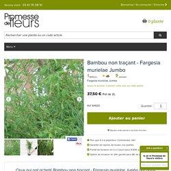 Le Fargesia murielae Jumbo, un bambou en touffe compact vert utilisé comme brise-vent