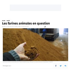 Les farines animales en question