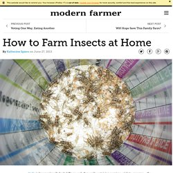 How to Farm Insects at Home
