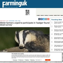 FARMINGUK 09/03/18 Welsh farmers urged to participate in 'badger found dead survey'