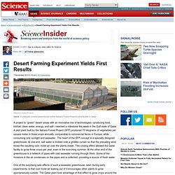 Desert Farming Experiment Yields First Results
