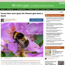 Farms that save space for flowers give bees a boost