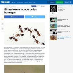 El fascinante mundo de las hormigas - Taringa!