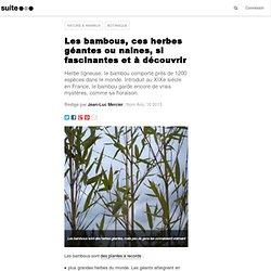 Les bambous, ces herbes géantes si fascinantes: Nain, géant, comestible ou d'ornement, le bambou dans tous ces états