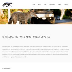10 Fascinating Facts About Urban Coyotes – The Urban Coyote Initiative