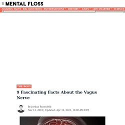 9 Fascinating Facts About the Vagus Nerve