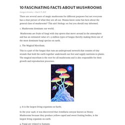 10 FASCINATING FACTS ABOUT MUSHROOMS – Telegraph