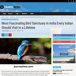 Most Fascinating Bird Sanctuary in India Every Indian Should Visit in a Lifetime