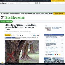 « Xylella fastidiosa », la bactérie tueuse d'oliviers, est arrivée en Corse