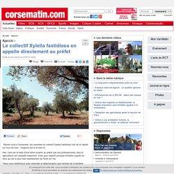 La Xylella fastidiosa menace la Corse