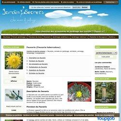 Faucaria (Faucaria tuberculosa) : arrosage, entretien
