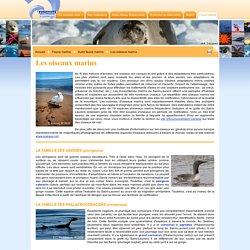 ROMM : Faune marine - Autre faune marine - Les oiseaux marins