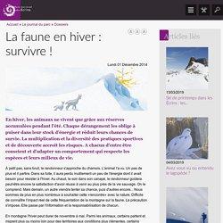 La faune en hiver : survivre !