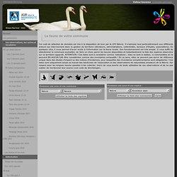 La faune de votre commune - www.faune-nievre.org