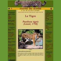 Fauves du Monde - Tigre