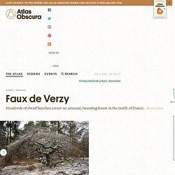 Faux de Verzy – Verzy, France