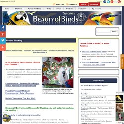 Feather Plucking in Pet Birds: Causes and Solutions
