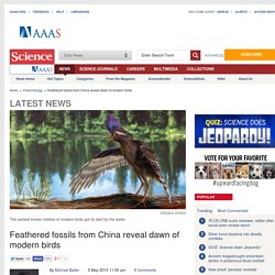 Feathered fossils from China reveal dawn of modern birds
