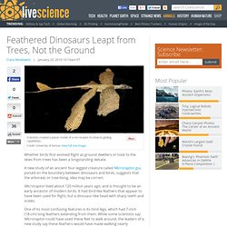 Feathered Dinosaurs Leapt from Trees, Not the Ground