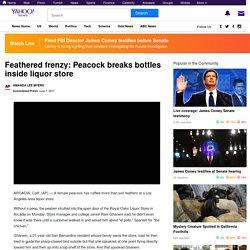 Feathered frenzy: Peacock breaks bottles inside liquor store