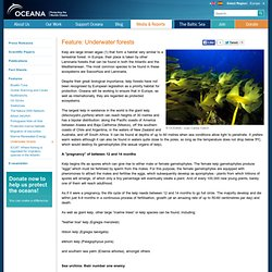 Feature: Underwater forests