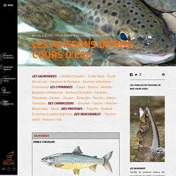 Les poissons de nos cours d'eau – Fédération Départementale de Pêche de l'Ariège