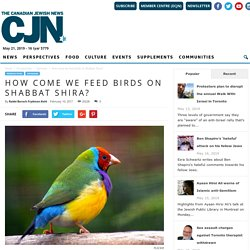 (Feeding) the birds of Shabbat Shirah