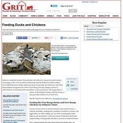 Feeding Ducks and Chickens - Animals