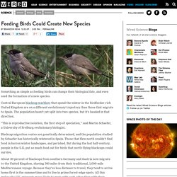 Feeding Birds Could Create New Species | Wired Science | Wired.c