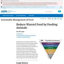 Reduce Wasted Food by Feeding Animals