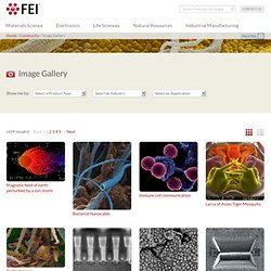 Electron Microscope Images - FEI Image Gallery - FEI