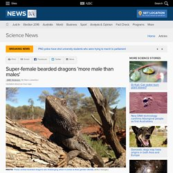 Super-female bearded dragons 'more male than males' - Science News