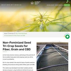 Non Feminized Seed Tri Crop Seeds For Fiber Food & CBD