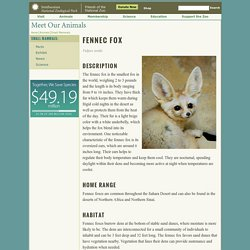 Fennec Fox Factsheet