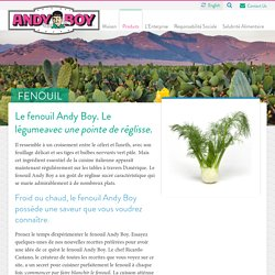 Fenouil - Andy Boy