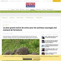 """""""Volée de piafs"""", centre de soins pour animaux sauvages, est menacé de fermeture - Sciencesetavenir.fr"""