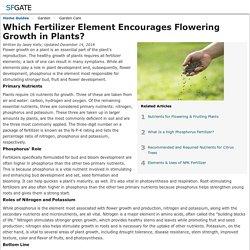 Which Fertilizer Element Encourages Flowering Growth in Plants?
