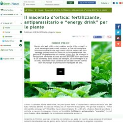 Il macerato ortica: fertilizzante, antiparassitario - Grow The Planet
