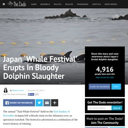 Japan 'Whale Festival' Erupts In Bloody Dolphin Slaughter