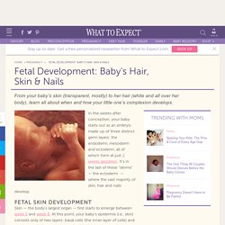 Fetal Hair, Skin and Nails