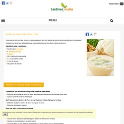 Soupe de feuilles de chou fleur : facile et savoureuse