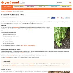 Feve : culture au potager